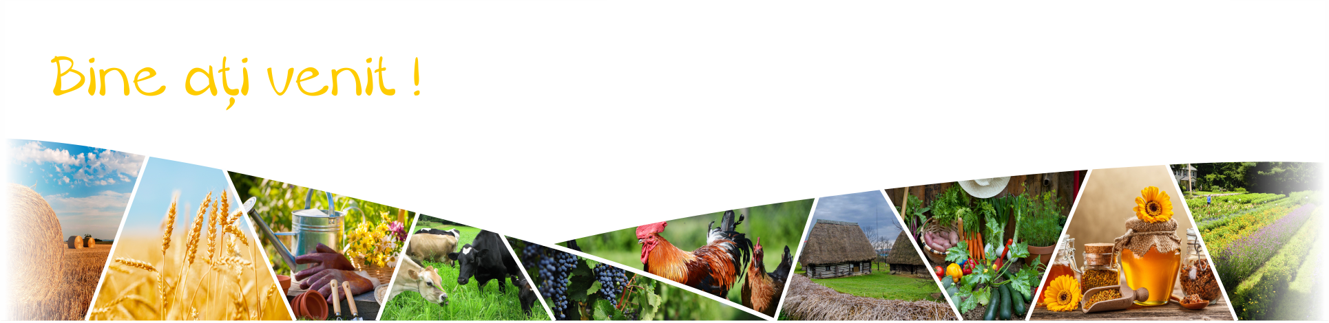 Publica anunturi agricole